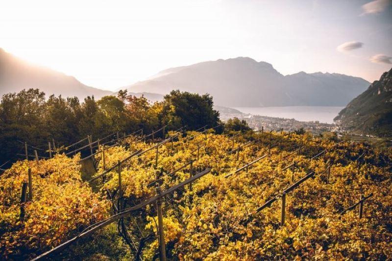 Trentino Wine Region of the Year